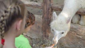 Små barn som matar en lama