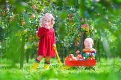 Små barn som spelar i en äppleträdgård Arkivbilder