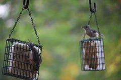 Små besökare för en fågel som hänger på förlagematare Royaltyfri Foto