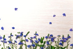 Små blåa lösa blommor Royaltyfri Foto