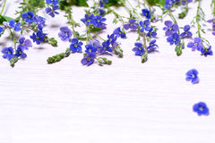 Små blåa lösa blommor Royaltyfria Bilder