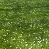 Små blommor royaltyfri bild