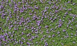 Små blommor Royaltyfria Bilder
