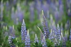 Små blommor Arkivfoton