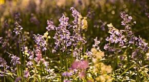 Små blommor för en skogvår Arkivbilder