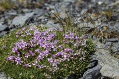 Små blommor i mossa Arkivbilder