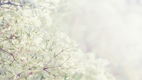 Små blommor med blom- bakgrund för solig tappning Arkivbild