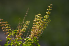 Små blommor på ett berg i Thailand Fotografering för Bildbyråer