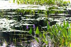 Små blommor som kommer ut ur vattnet fotografering för bildbyråer