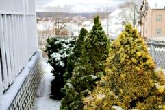 Små buskar som täckas i snö Arkivfoto