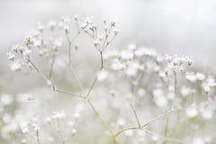 Små Defocused vita blommor Royaltyfri Bild