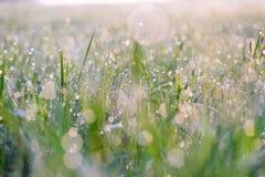 Små droppar av dagg på gräset som glöder i morgonsolen Royaltyfri Fotografi