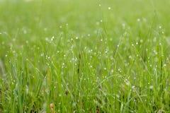 Små droppar av dagg på gräset som glöder i morgonsolen Arkivfoto