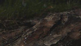 Små droppar av regn som faller på skäll i Forest Macro Shot med Laowa och Phantom Camera arkivfilmer