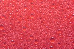 Små droppar för rött vatten på ett exponeringsglasslut upp makroskott regniga dagar royaltyfri foto