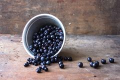 Små droppar för vatten för sommarbärblåbär Royaltyfria Foton