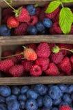 Små droppar för vatten för för sommarbärblåbär som och hallon är synliga på 100% Royaltyfria Bilder