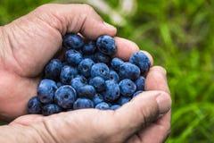 Små droppar för vatten för för sommarbärblåbär som och hallon är synliga på 100% Arkivbilder