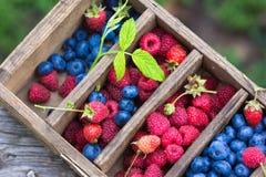 Små droppar för vatten för för sommarbärblåbär som och hallon är synliga på 100% Arkivfoto
