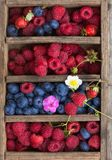 Små droppar för vatten för för sommarbärblåbär som och hallon är synliga på 100% Royaltyfria Foton