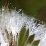 Små droppar på blomman arkivbilder