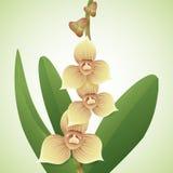 Små dyrbara orkidér och knoppar, vektorillustration Arkivbilder