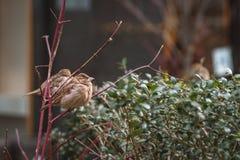 Små fåglar på en kall dag i staden royaltyfria bilder