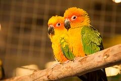 Små fåglar på stolpen Royaltyfria Foton
