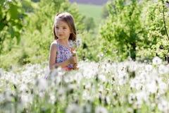 Små för vit flicka för maskrosfält behandla som ett barn härliga lyckliga gröna maskrosor för änggulingblommor som naturen parker Royaltyfria Bilder