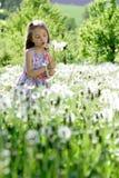 Små för vit flicka för maskrosfält behandla som ett barn härliga lyckliga gröna maskrosor för änggulingblommor som naturen parker Arkivfoto