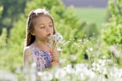 Små för vit flicka för maskrosfält behandla som ett barn härliga lyckliga gröna maskrosor för änggulingblommor som naturen parker Arkivfoton