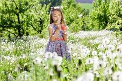 Små för vit flicka för maskrosfält behandla som ett barn härliga lyckliga gröna maskrosor för änggulingblommor som naturen parker Royaltyfri Fotografi