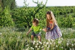Små för vit pojke för flicka för maskrosfält behandla som ett barn lyckliga gröna maskrosor för änggulingblommor som naturen park Fotografering för Bildbyråer