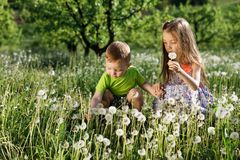 Små för vit pojke för flicka för maskrosfält behandla som ett barn lyckliga gröna maskrosor för änggulingblommor som naturen park Royaltyfri Foto