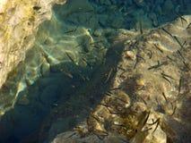Små fiskar på tryck för tapet för strandmakrobakgrund fina arkivbild