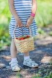 Små flickor räcker den hållande korgen som är full av jordgubbar på hackan din egen lantgård Royaltyfri Bild