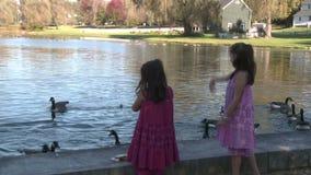 Små flickor som matar änder (3 av 7) stock video
