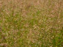 Små grässtrån på en solig dag Royaltyfria Bilder