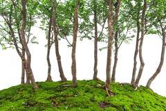 Små gröna bladträd på mossa täckte jordning, miniatyrbonsai royaltyfri bild