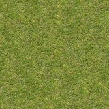 Små gröna gräs seamless textur Arkivbilder