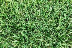 Små gröna sidor av gräs på det texturerade jordfältet för bakgrund och Arkivbild