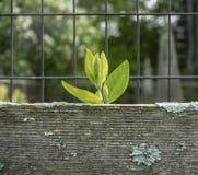 Små gröna sidor som når en höjdpunkt över ett trästaket arkivbild