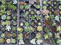 Små gröna växter av olika former Royaltyfri Foto