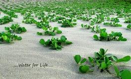 Små gröna växter på den sandiga stranden Royaltyfria Foton