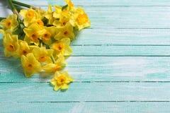 Små gula påskliljor blommar på turkos målat trä arkivfoton