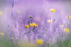 Små gulingblommor - closeup Royaltyfri Fotografi
