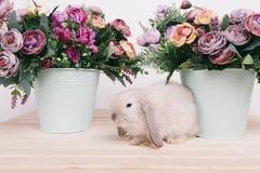 Små gulliga dekorativa kaniner Arkivfoton