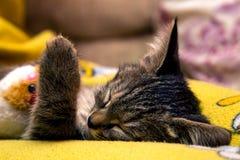 Små gulliga kattungesömnar som kramar den flotta leksaken Arkivbild