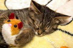 Små gulliga kattungesömnar som kramar den flotta leksaken Arkivfoton