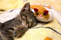 Små gulliga kattungesömnar som kramar den flotta leksaken Royaltyfri Fotografi